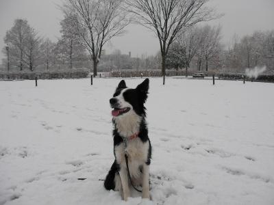 雪の中のミニー