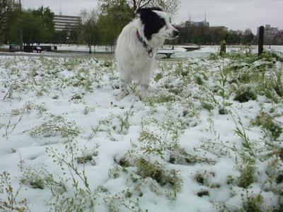 モサモサに伸びた雑草と雪???