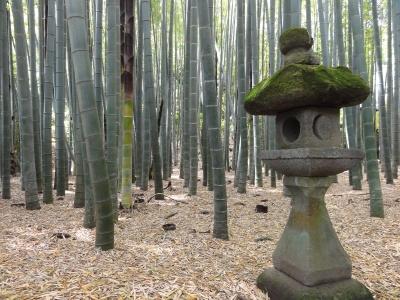 鎌倉の竹藪