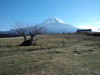 富士山がきれいだ~
