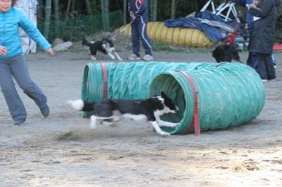 トンネルに向かって加速するミニちゃん