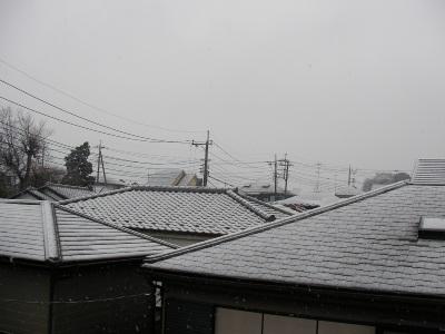雪が降ったんだってば