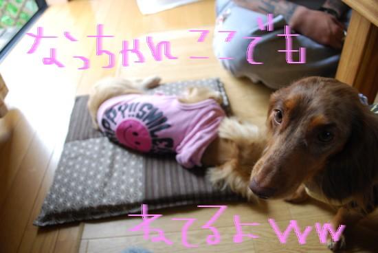 DSC_0401niigata.jpg