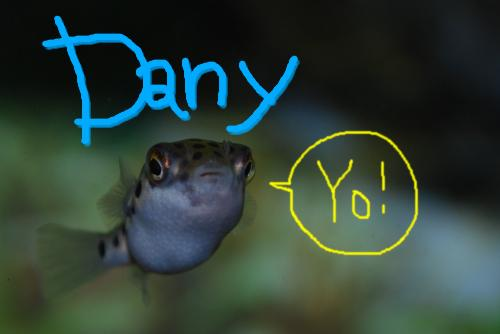 Dany2.jpg