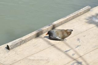 甲羅干し中の鳥