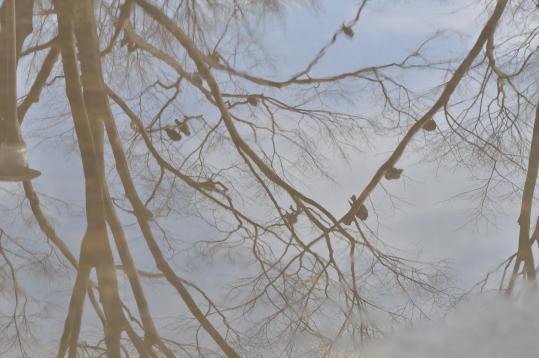 木に止まる鳩と水たまり