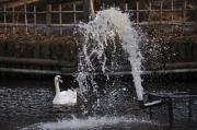噴水と白鳥 1/500
