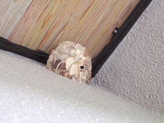 コガタスズメバチの巣?