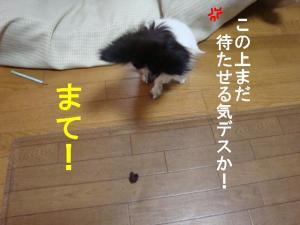 DSC07897.jpg