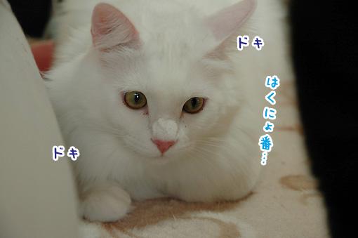 01_20090918235355.jpg
