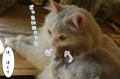 01_20101207020930.jpg
