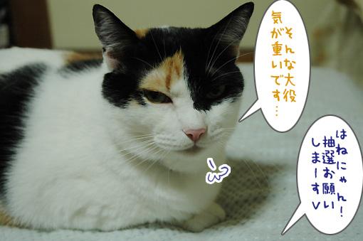 02_20091001225509.jpg