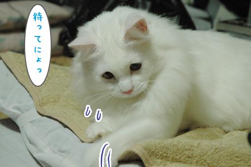 02_20091122215716.jpg