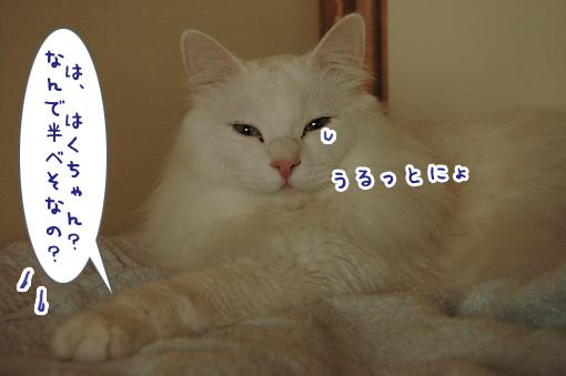 02_20091211175328.jpg