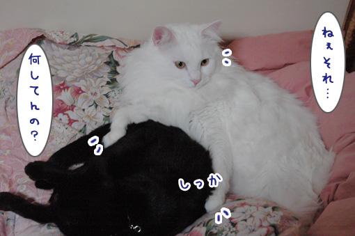 02_20100124172036.jpg