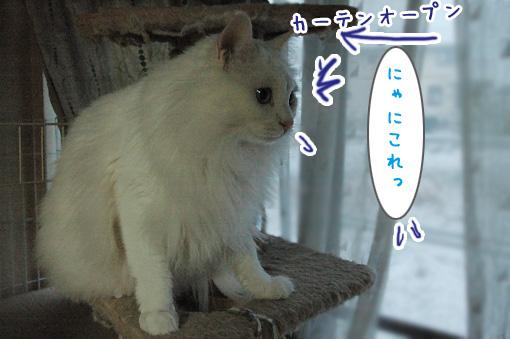 02_20100206194120.jpg