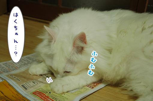 02_20101101184057.jpg