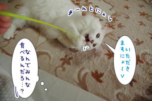 03_20090918235355.jpg