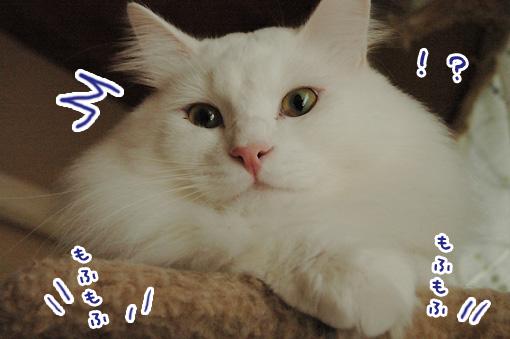 03_20091024233856.jpg