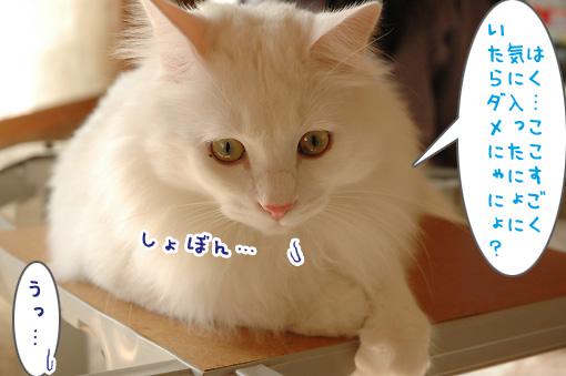 03_20091104235833.jpg