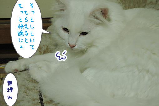03_20091125225145.jpg