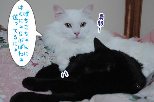 03_20100124172035.jpg