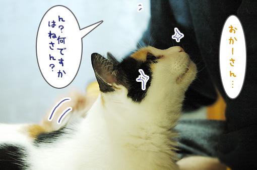 03_20101021180613.jpg