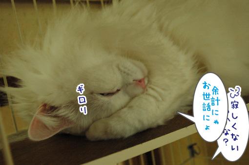 03_20110618191006.jpg