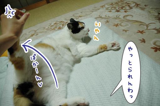 04_20090927131820.jpg