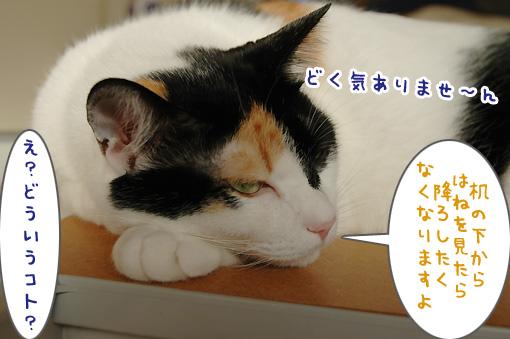04_20091106001701.jpg