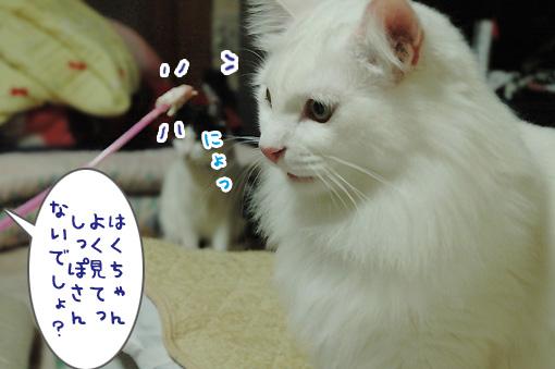 04_20091121223801.jpg