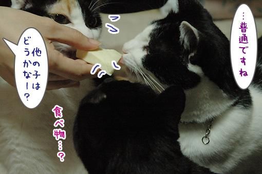04_20091205222139.jpg