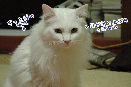 04_20091211175328.jpg