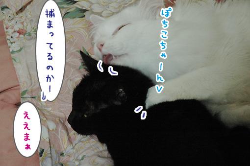 04_20100112023331.jpg