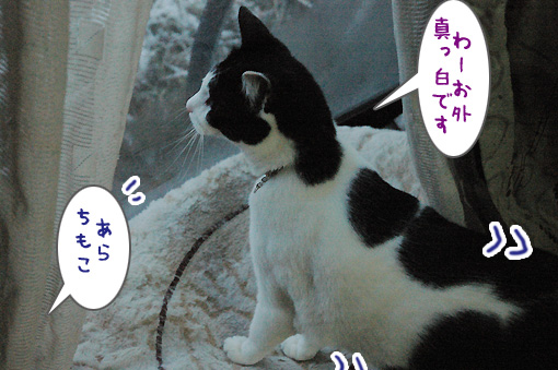 04_20100206194057.jpg