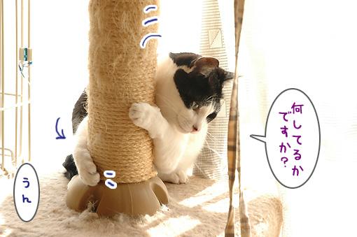 04_20100305180627.jpg