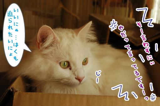 04_20110330144705.jpg