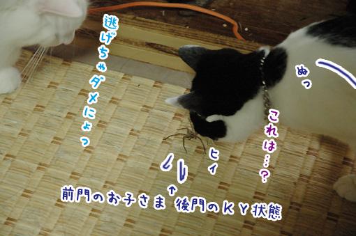 05_20090922232401.jpg
