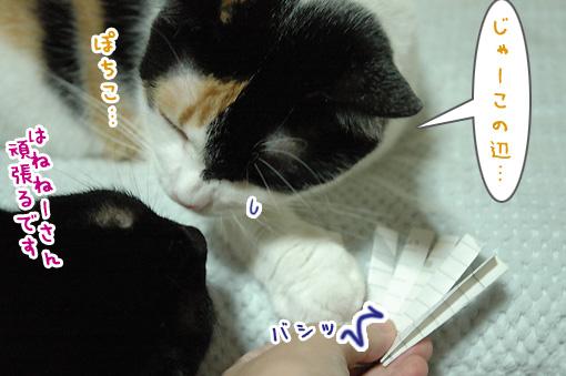 05_20091001225329.jpg