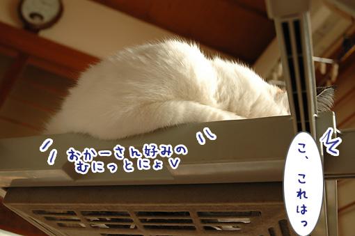 05_20091106001701.jpg