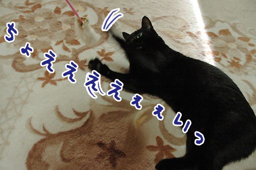 05_20091116002249.jpg