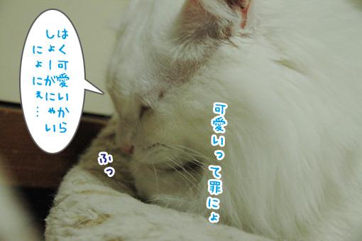 05_20091125225145.jpg