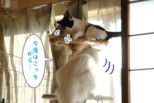 05_20091130175708.jpg