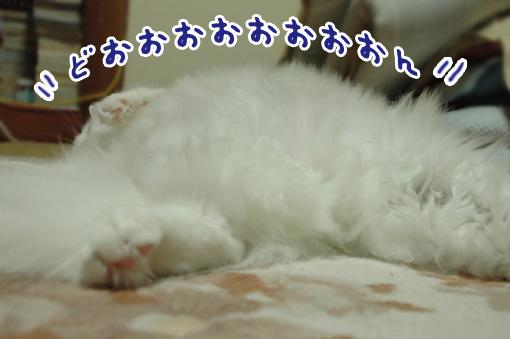 05_20091202201453.jpg