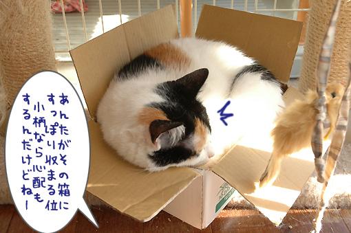 05_20091203214430.jpg