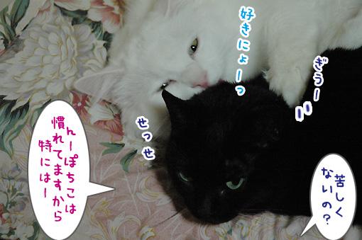 05_20100112023331.jpg