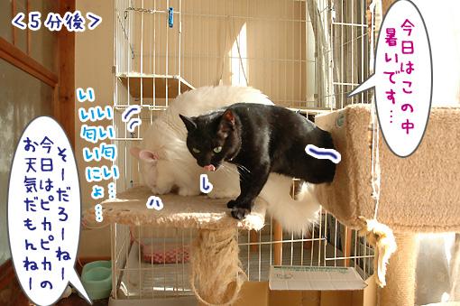 05_20100329200757.jpg