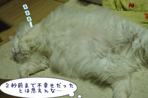 05_20110104191040.jpg
