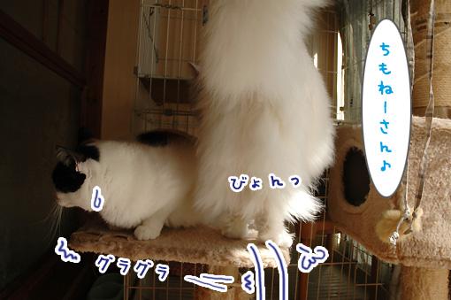 05_20110225180237.jpg
