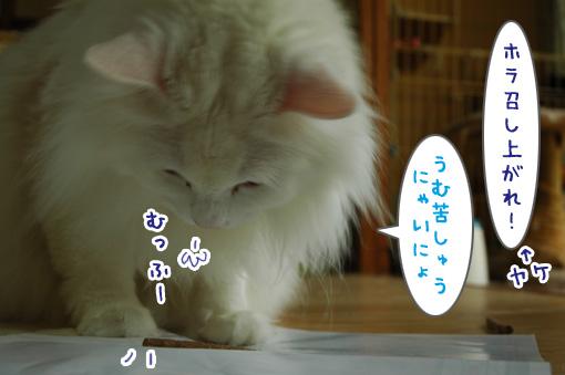 05_20110531174001.jpg